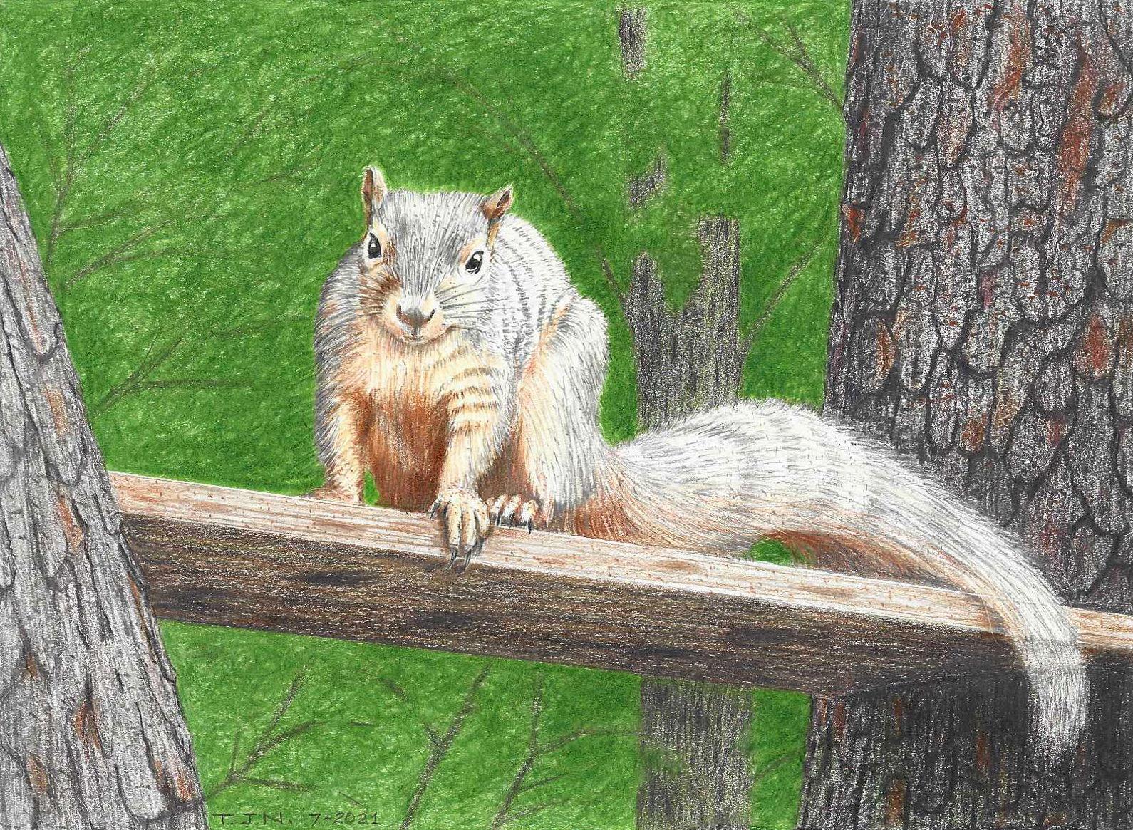 Cecil B De Squirrel